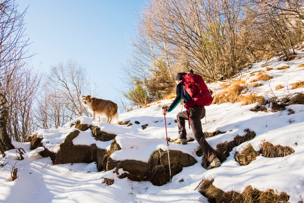 Hiker woman with dog climbs through snowy forest mountains