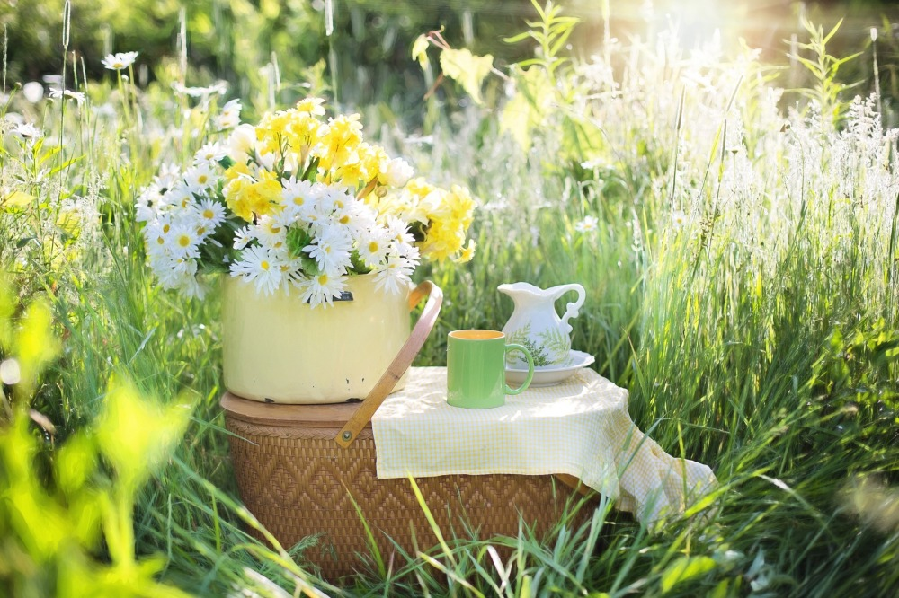 daisies-1466851_1920