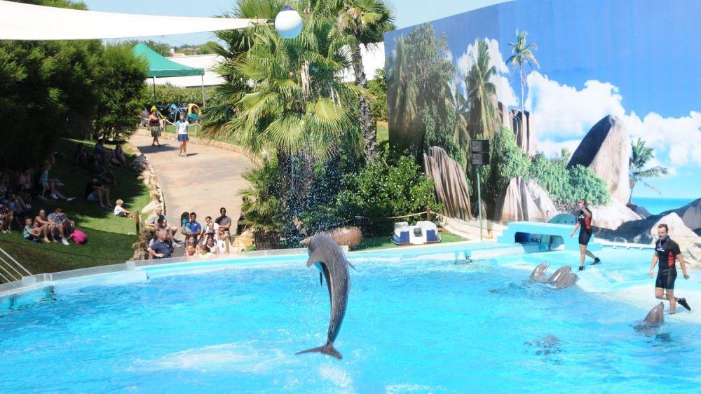 Zoomarine-delfini