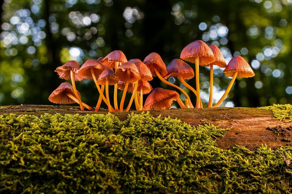 mushroom-3659165_1920